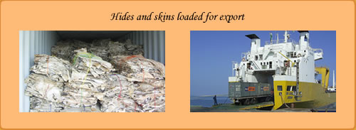 Beyomol images of hides and skins loaded for export
